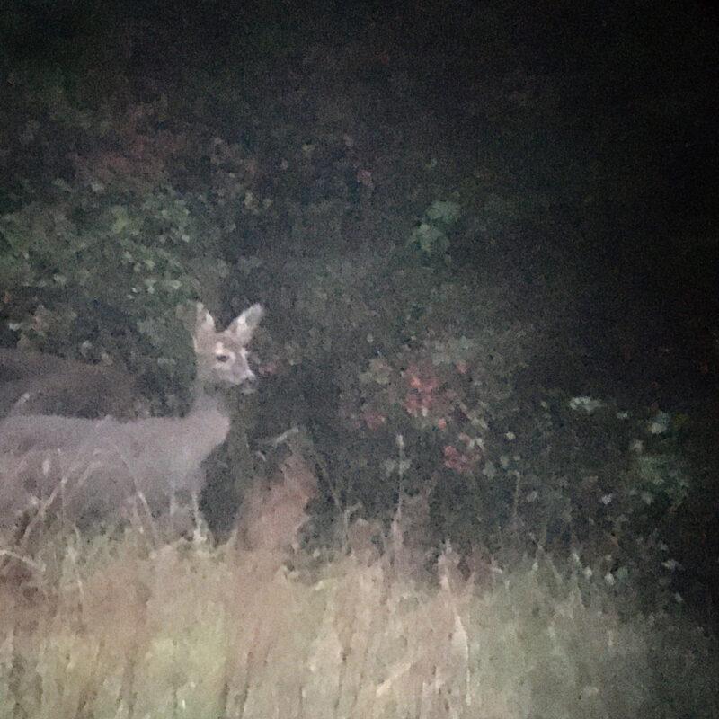 a deer visit