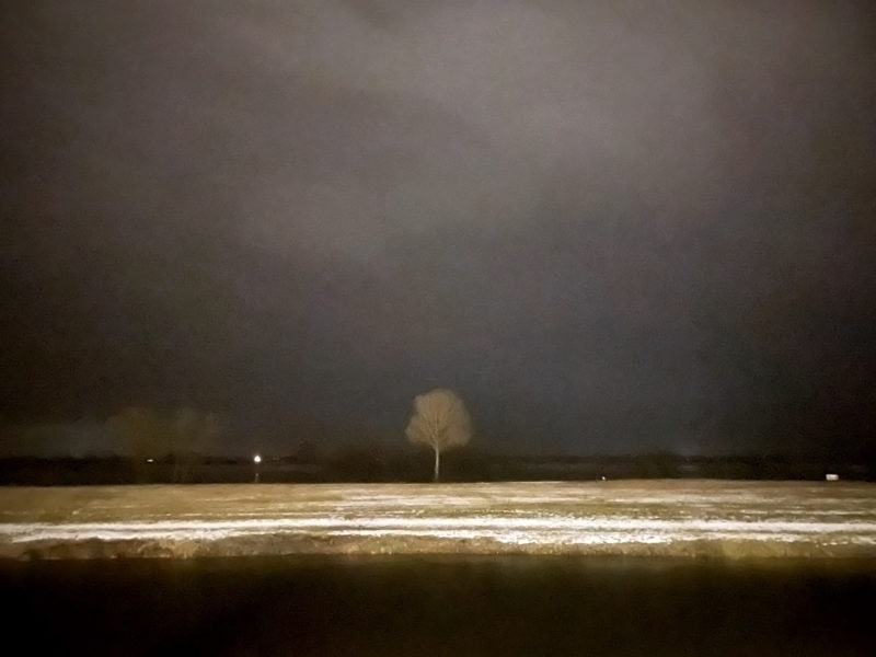 Winter: Tree near river Elbe